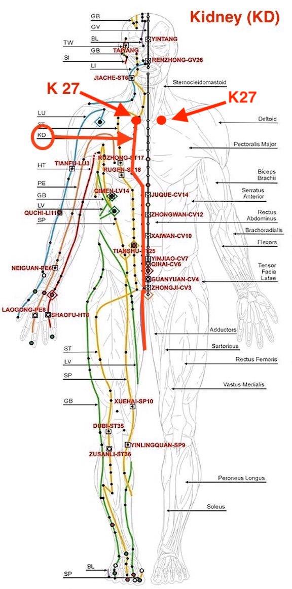 Kidney meridian front view