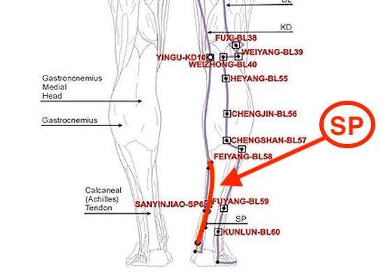 Spleen meridian line back view