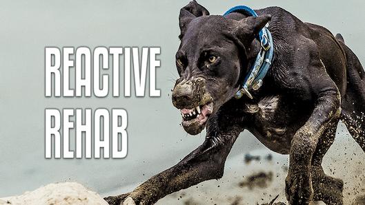 Reactive Rehab Course