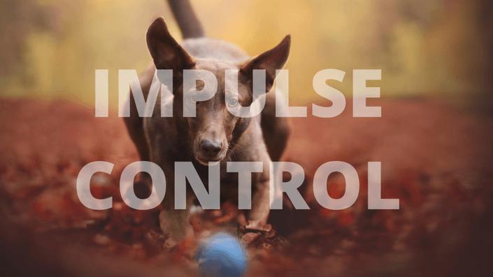 Impulse Control Course