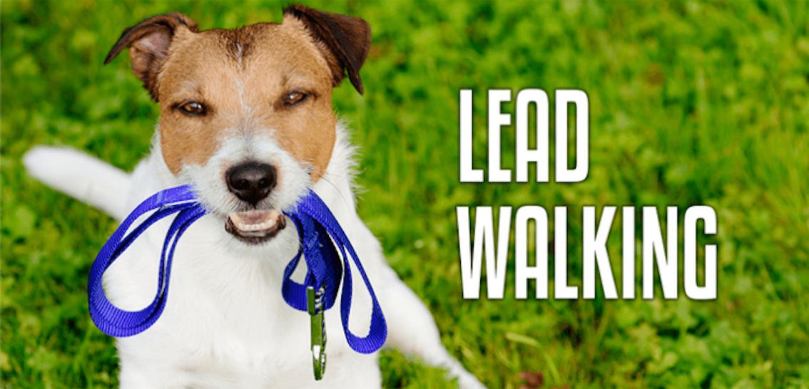 Lead Walking Course