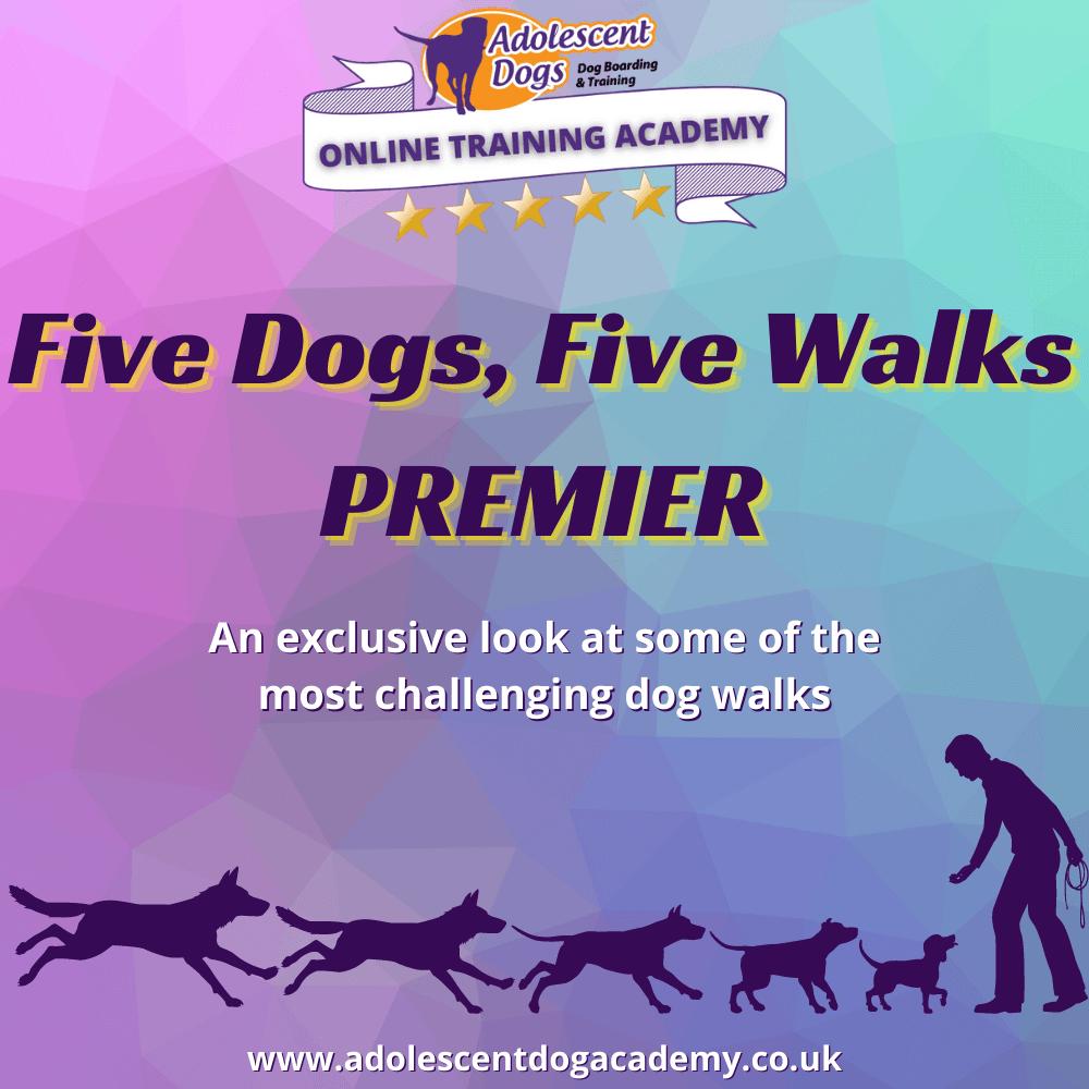 Five dogs, five walks