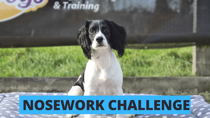 Nosework Challenge Course