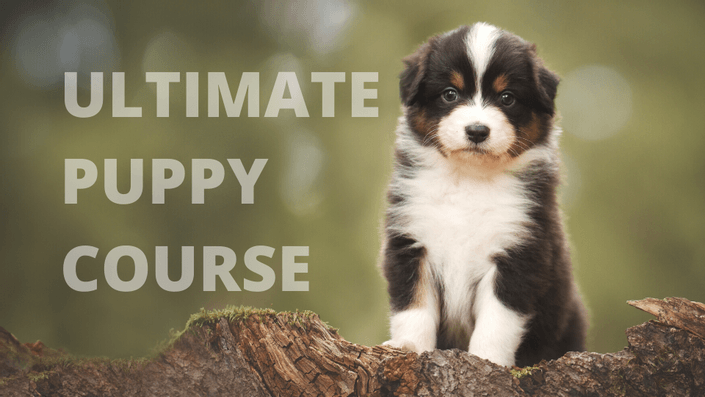 Ultimate Puppy Course