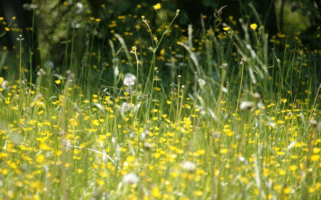 7 Techniques for Seasonal Allergy Relief