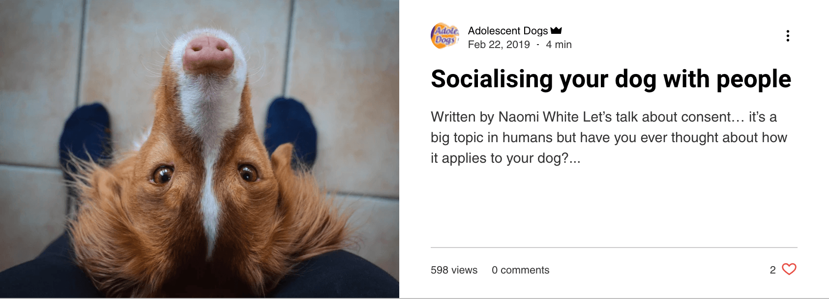 Socialising Your Dog with People - - blog post by Adolescent Dogs Online Training Academy