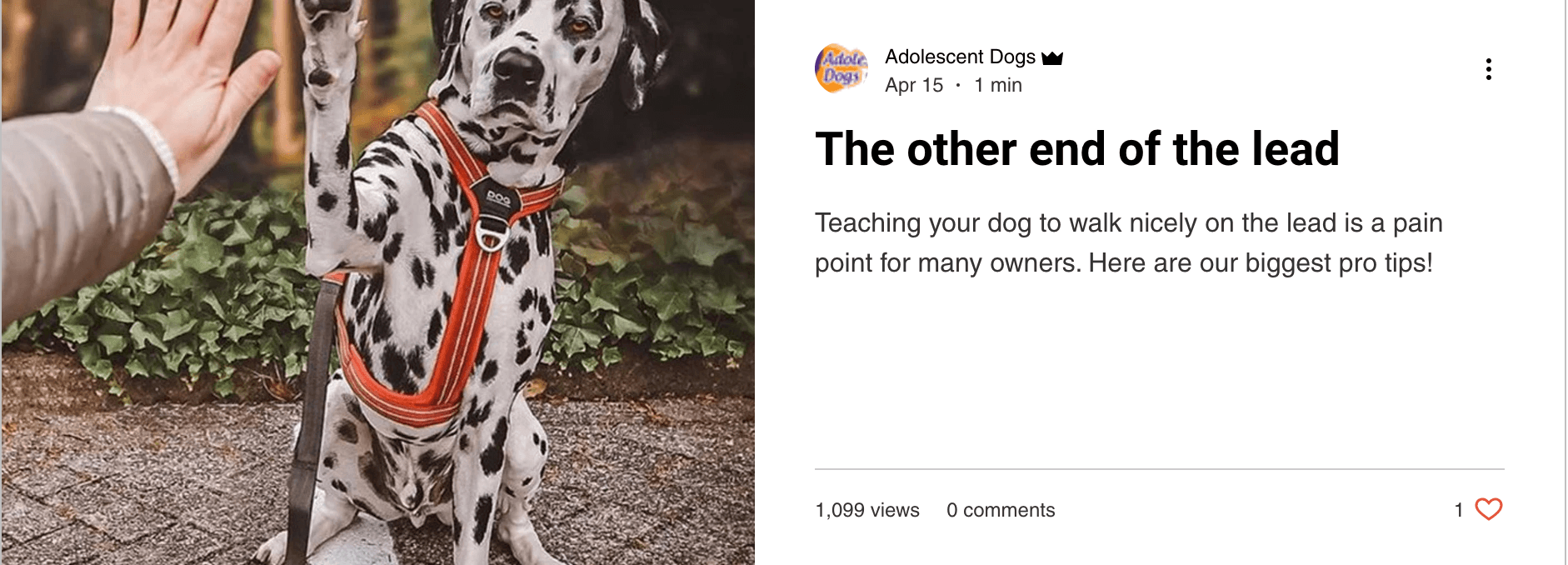 The Other End of teh Lead - blog by Adolescent Dogs